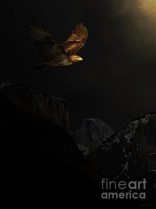 Homeward Bound Print by Wingsdomain Art and Photography