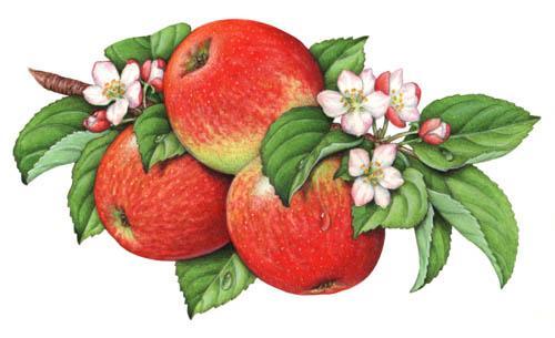 Apple Crisp Paint Color