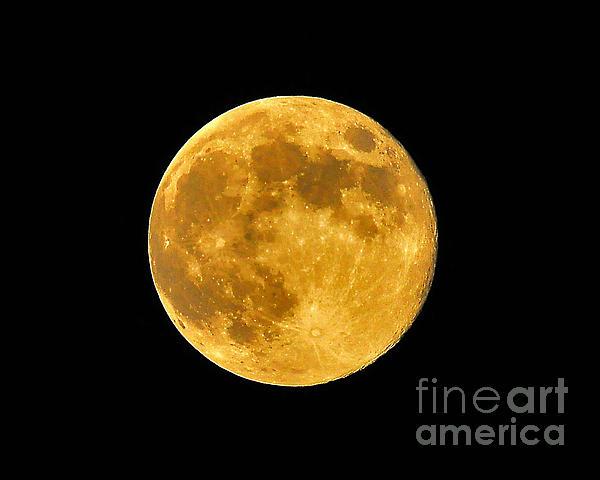 Honey Moon Close Up Print by Al Powell Photography USA