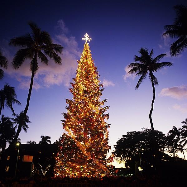 Honolulu Christmas Print by Kyle Rothenborg - Printscapes