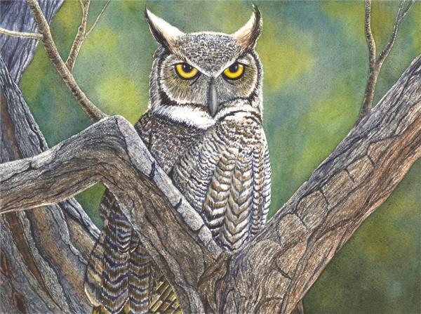 Hooter Print by Catherine G McElroy