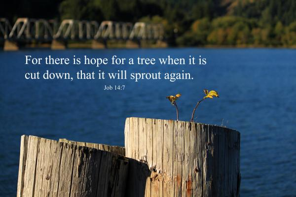 Hope For A Tree Print by James Eddy