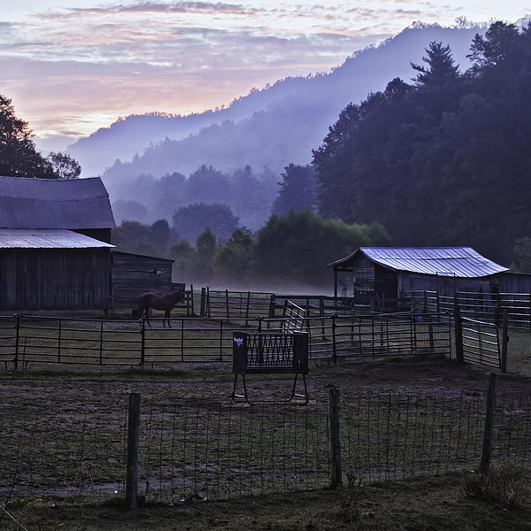 Horse At Home - North Carolina Farm Scene Print by Rob Travis