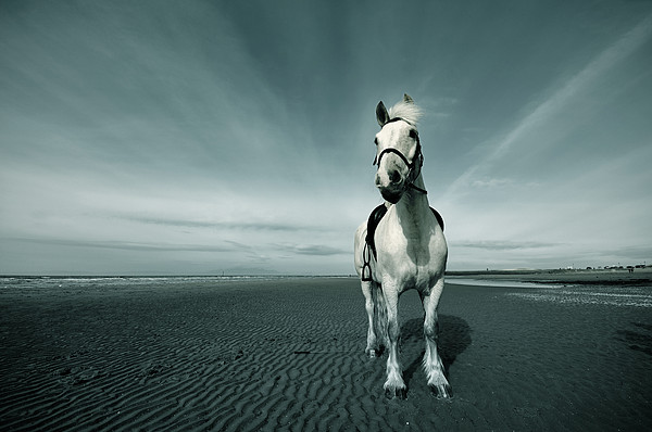 Horse At Irvine Beach Print by Mikeimages