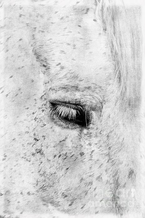 Horse Eye Print by Darren Fisher