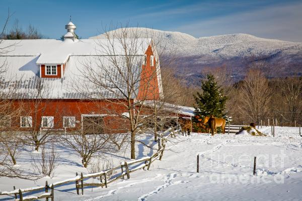 Horse Farm And Mount Mansfield Print by Susan Cole Kelly