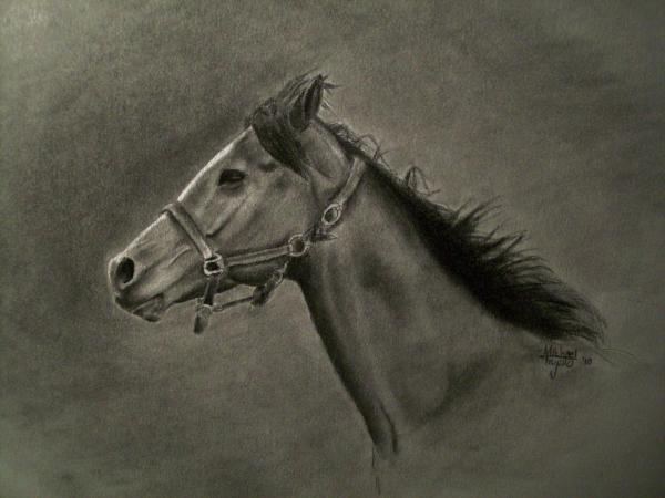 Horse Head Drawing  - Horse Head Fine Art Print