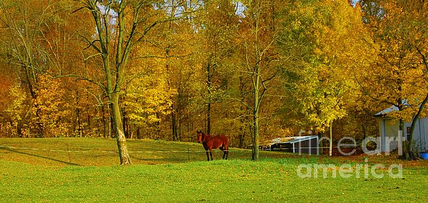 Horse In Autumn Print by Kathleen Struckle
