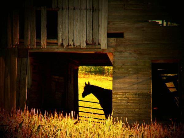 Joyce Kimble Smith - Horse in the Barn