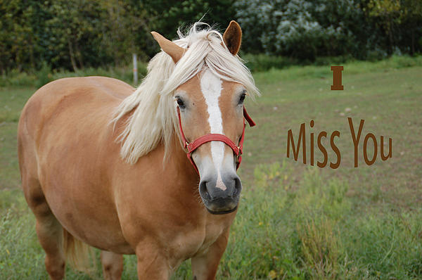 Horse Miss You Print by Aimee L Maher Photography and Art