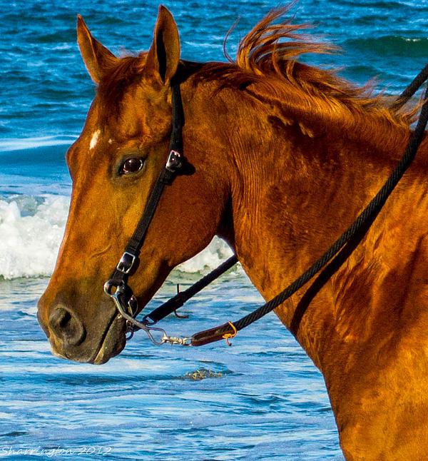 Horse Portrait  Print by Shannon Harrington