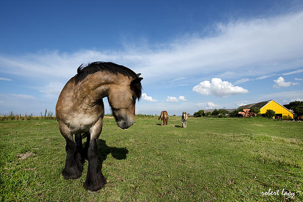 Horsepower Print by Robert Lacy