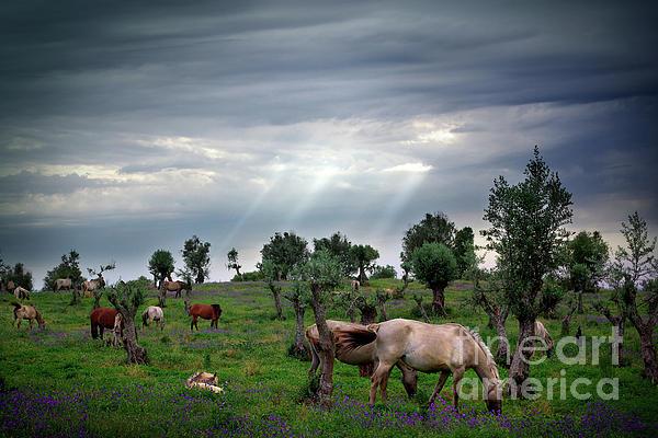 Horses Eating Print by Carlos Caetano
