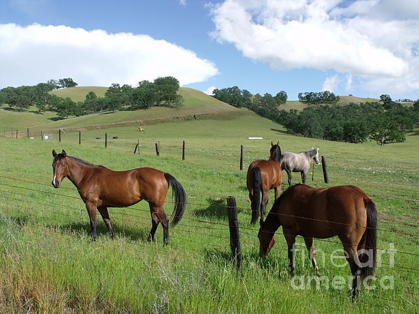 Cherokee  Blue - Horses in Pasture 001