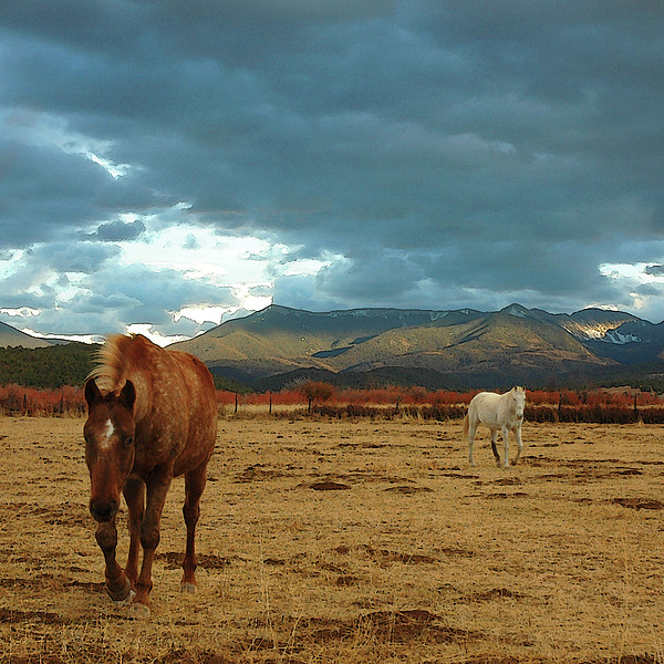Horses In Winter Landscape  Truchas, New Mexico Print by Mary Hockenbery