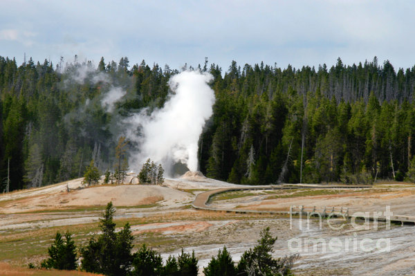 Hot Steam Dog Yellowstone National Park Wy Print by Christine Till