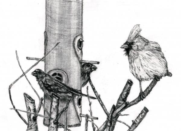 House Finches And Cardinal Print by Joy Neasley