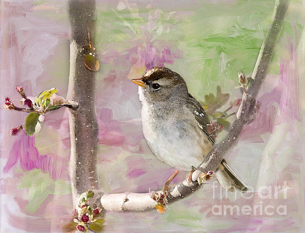 Betty LaRue - House Sparrow
