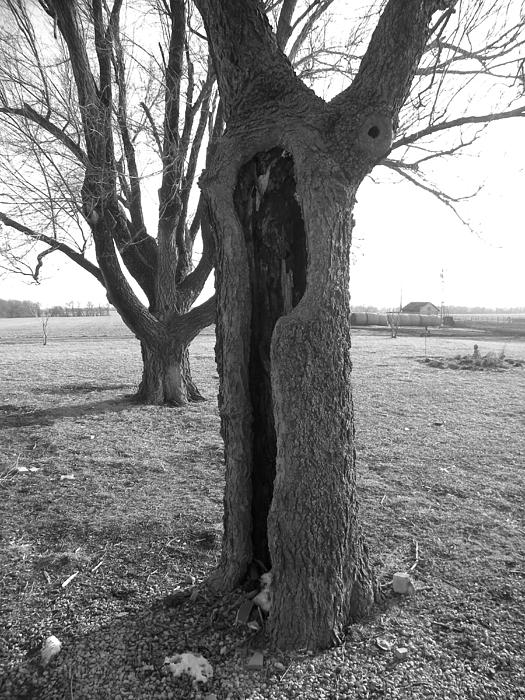 Sheri Lauren Schmidt - Howling Tree