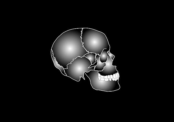 Human Skull Anatomy, Artwork Print by Francis Leroy, Biocosmos