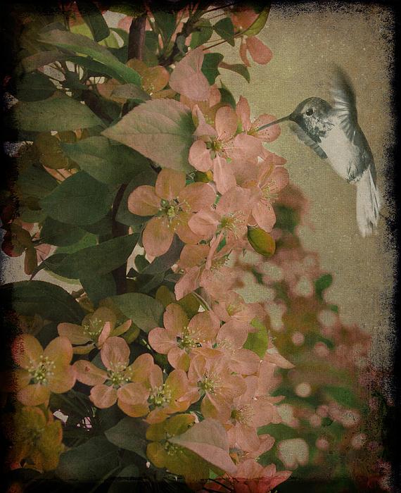 Marie  Gale - Hummingbird