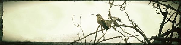 Monica Magallon - Hummingbird