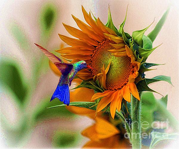 Hummingbird On Sunflower Print by John  Kolenberg