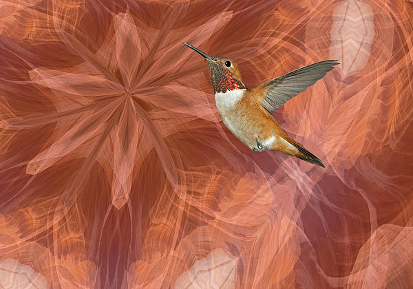 Hummingbird Portal Print by Gregory Scott