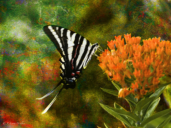 Hungry Little Butterfly Print by J Larry Walker