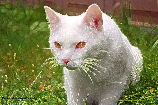 Tyra  OBryant - Hunting Cat