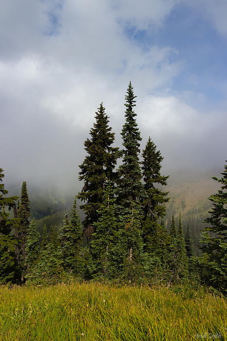 Heidi Smith - Hurricane Ridge Beauty