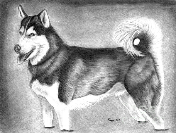 Husky  Print by Russ  Smith