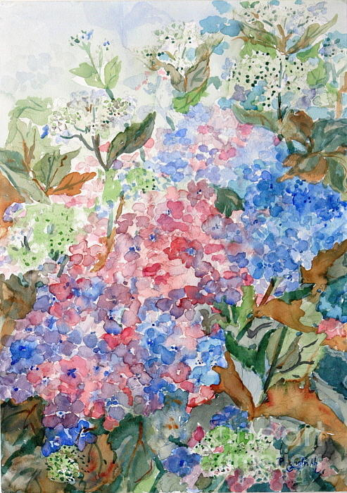 Phong Trinh - Hydrangea In The Mist