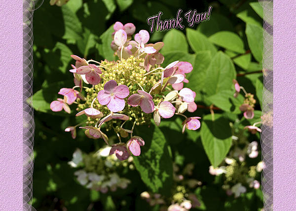 Hydrangea Thank You Print by Larry Bishop