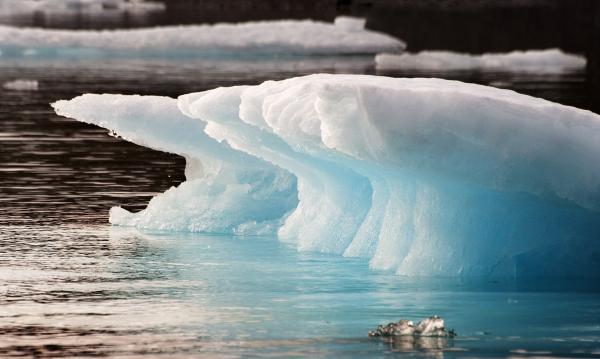 Ice Bears Photograph