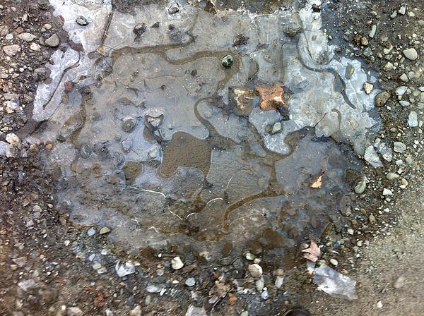 Ice On The Rocks Print by Elijah Brook