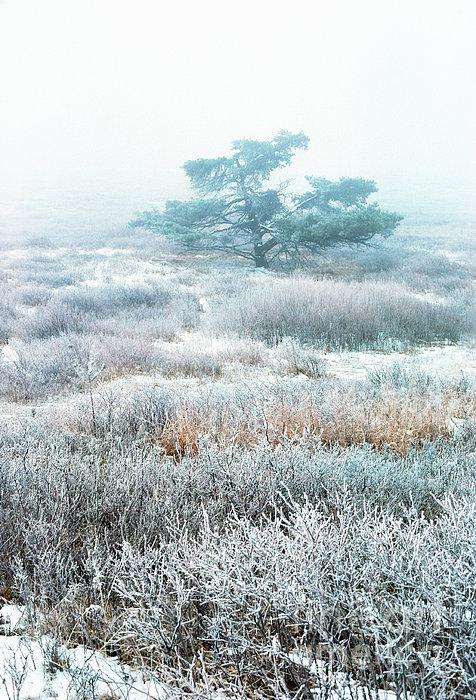 Ice Tree Shenandoah National Park Print by Thomas R Fletcher