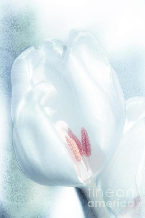 Icy Dream Print by Viaina