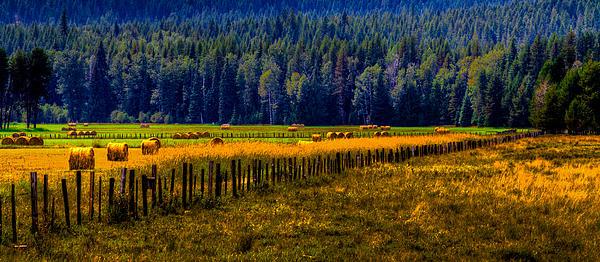 Idaho Hay Bales Print by David Patterson