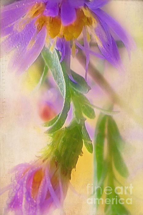 Impression Of Asters Print by Judi Bagwell