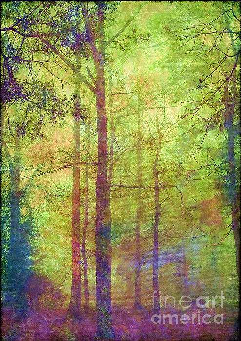 In The Forest Print by Judi Bagwell