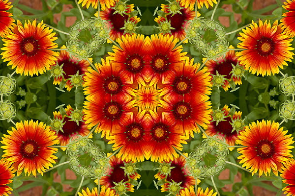 Bill Barber - Indian Blanket Flower Kaleidoscope