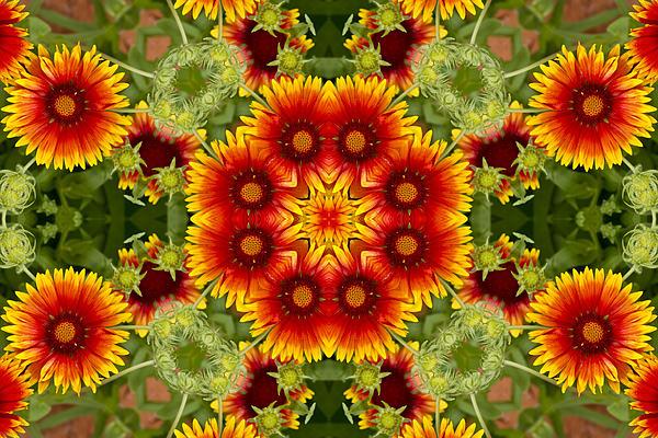 Bill Barber - Indian Blanket Flower Kaleidoscope