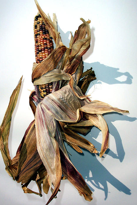 Mary Gillis - Indian Corn 1