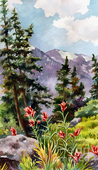 Anne Gifford - Indian Paintbrush