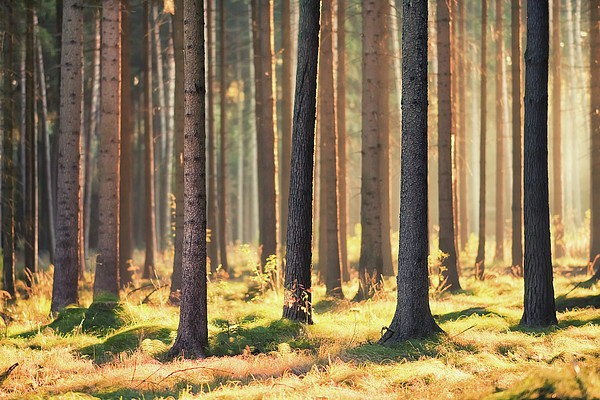 Indian Summer In Woods Print by Matthias Haker Photography