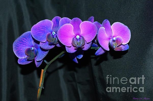 Donna Brown - Indigo Mystique Orchids