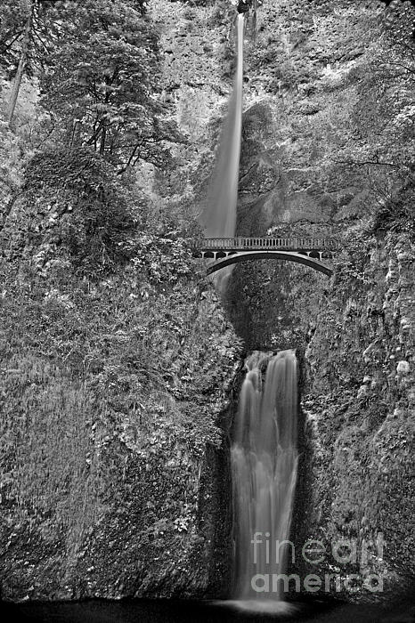 Infrared Multnomah Print by David Bearden