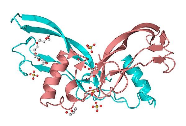 Inhibin Beta A Molecule Print by Laguna Design