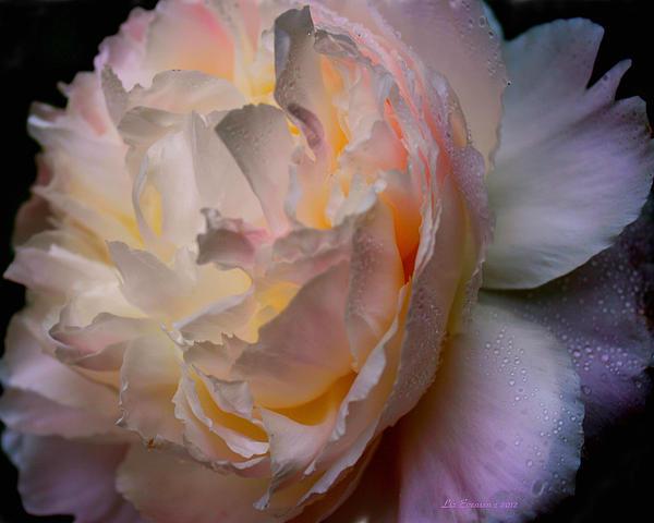 Inner Beauty Print by Liz Evensen